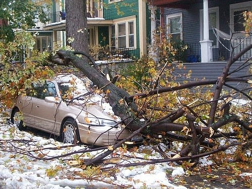 If your tree falls in your neighbors yard, do you have to clean it up?